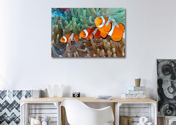 Clownfish Prints Canvas
