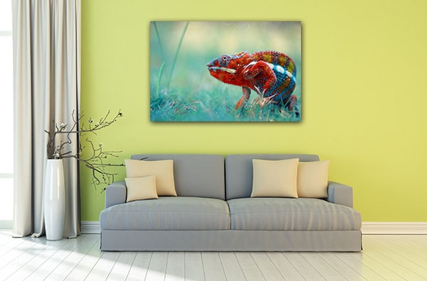 Beautiful ... Colorful Chameleon Wall Art Print Canvas Art Prints