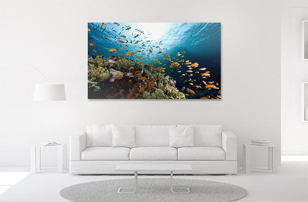 Coral Fish Canvas Prints