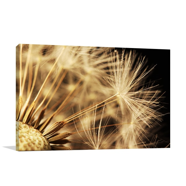 Dandelion Canvas Art Print Wall Art ...