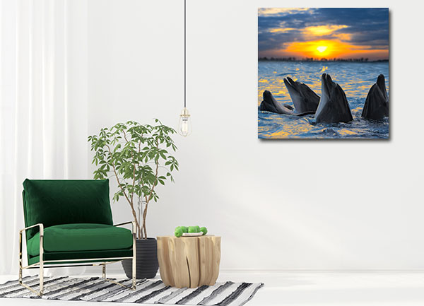 Dolphins in Sunset Canvas Prints