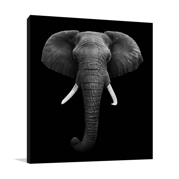 Elephant Head Isolated Canvas Prints