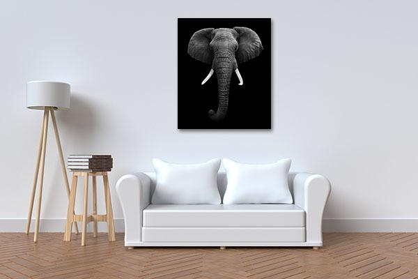 Elephant Head Isolated Wall Art