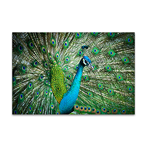 Feathers Out Wall Art Print