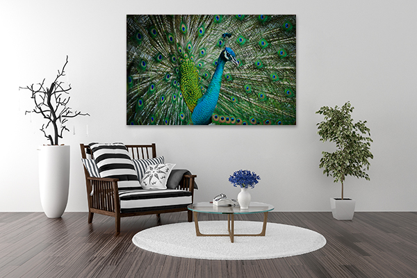 Feathers Out Wall Art Print on the wall