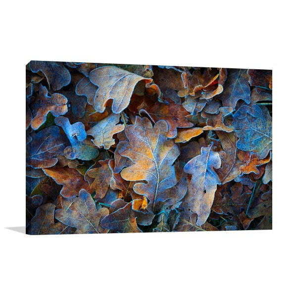Frozen Oak Leaves Art Print Canvas Art Prints