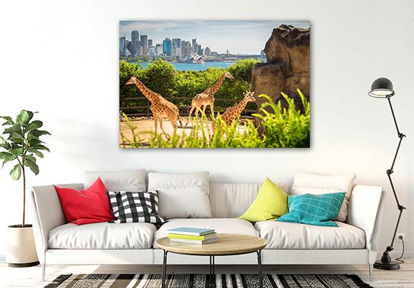 Giraffes With Sydney Beauty Art Prints