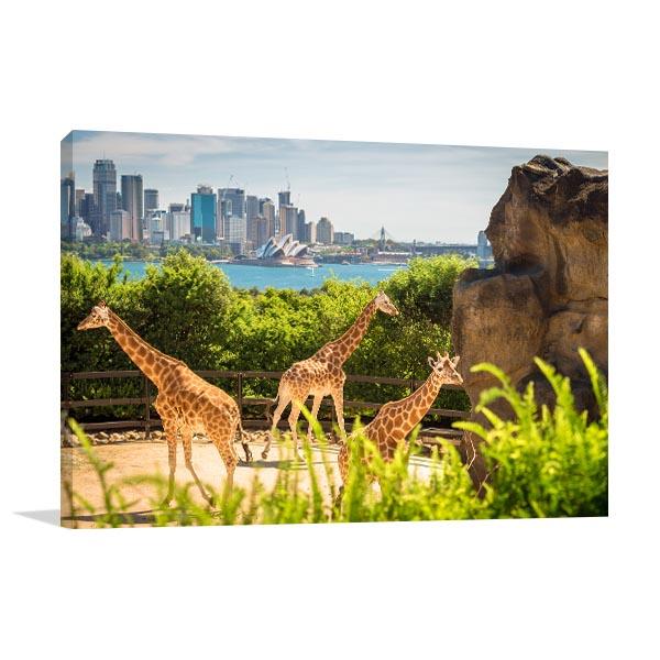 Giraffes With Sydney Beauty Wall Art