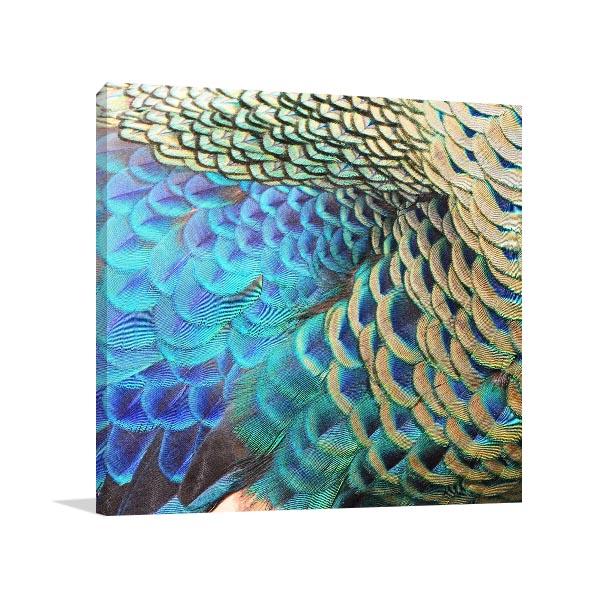 Green Peacock Feathers Art Print Wall Art