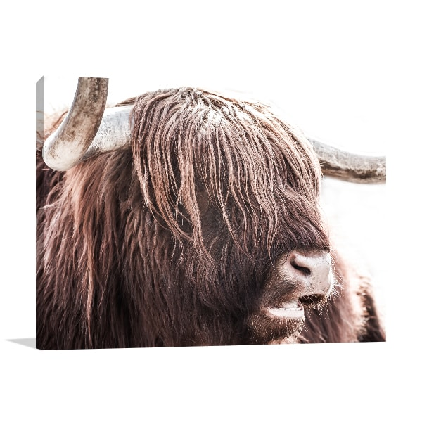Highland Cattle Wall Art Print Art Prints