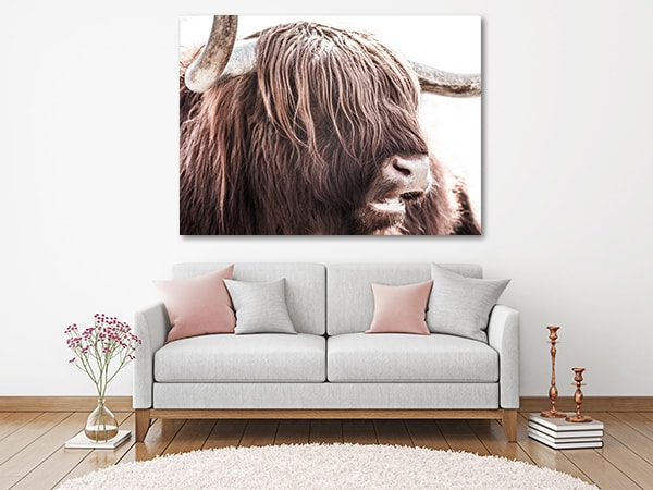 Highland Cattle Wall Art Print Prints Canvas