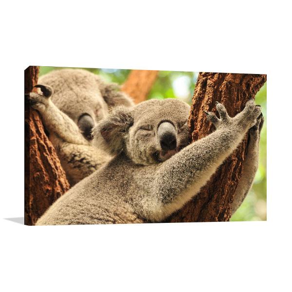 Koalas At Brisbane Artwork