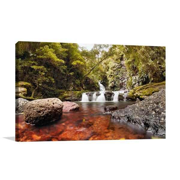 Lamington National Park Gold Coast Art Prints