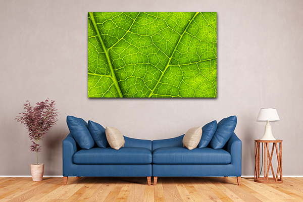 Leaf Texture Canvas Prints