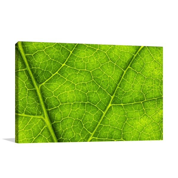 Leaf Texture Prints Canvas
