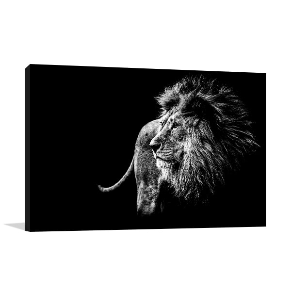 Lion in Black and White Prints Canvas