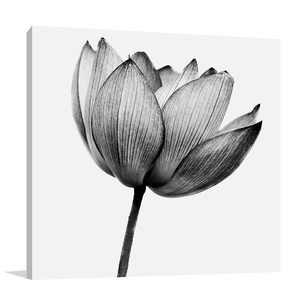 Lotus In Black And White Wall Art