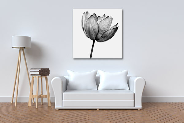 Lotus In Black And White Canvas Prints