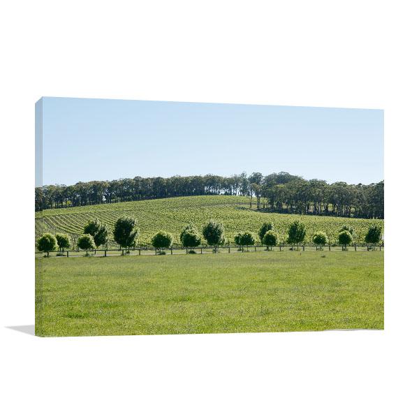 Lush Green Vineyard Bowral Canvas Art Prints