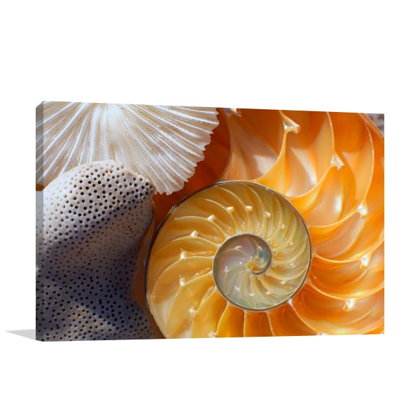 Nautilus Canvas Art Print Canvas Art Prints