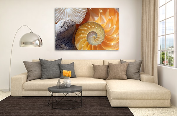 Nautilus Canvas Art Print Wall Art