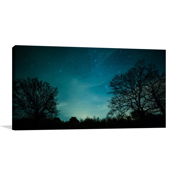 Night in Forest Canvas Art