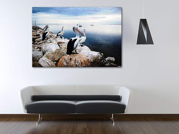 Pelicans Wall Art Print on the wall