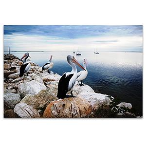 Pelicans Wall Art Print