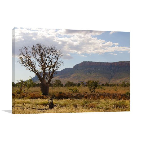 Perth Art Print Boab Tree Wall Art Photo Print