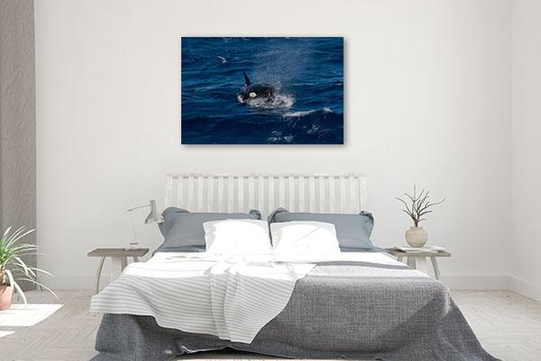 Perth Art Print Bremer Canyon Killer Whale Canvas Photo Print