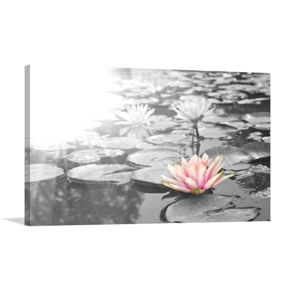 Pink lotus flowers black and white nature photography canvas pink lotus flowers art prints mightylinksfo