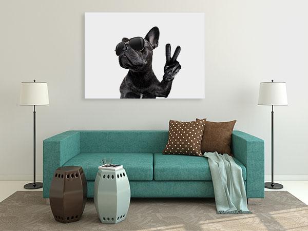 Posing French Bulldog Canvas Prints