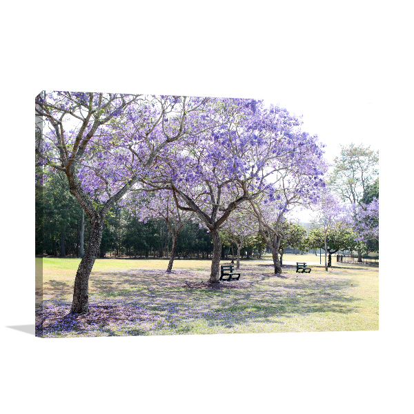 Queensland Brisbane Art Print New Farm Park Canvas Prints