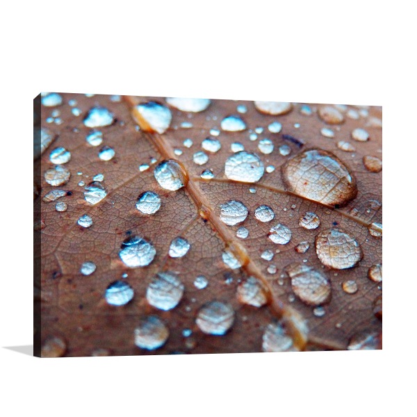 Rain Drops On Oak Prints Canvas