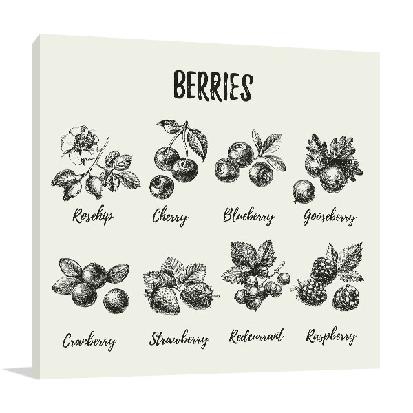 Sketch Of Berries Prints Canvas