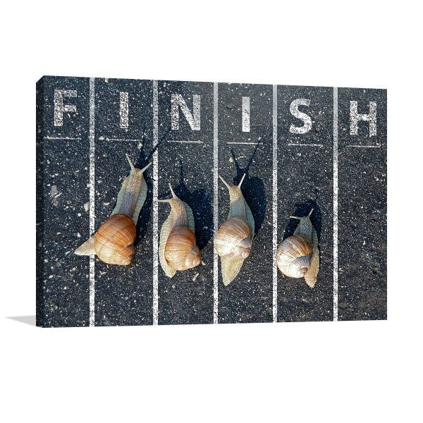 Snail At Finish Line Canvas Prints