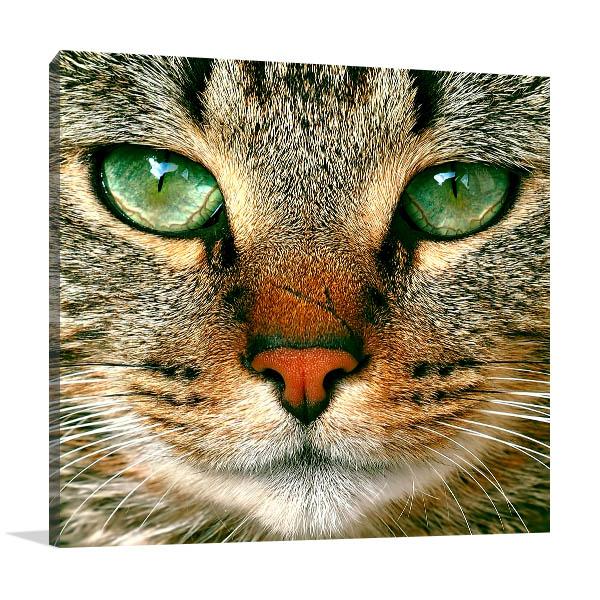 Staring Cat Canvas Art