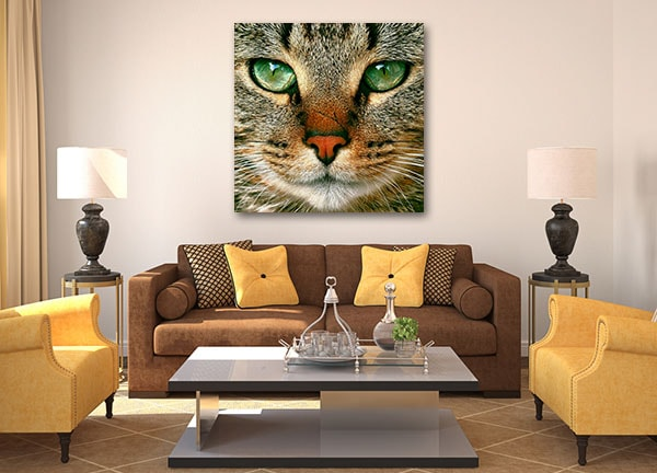 Staring Cat Prints Canvas