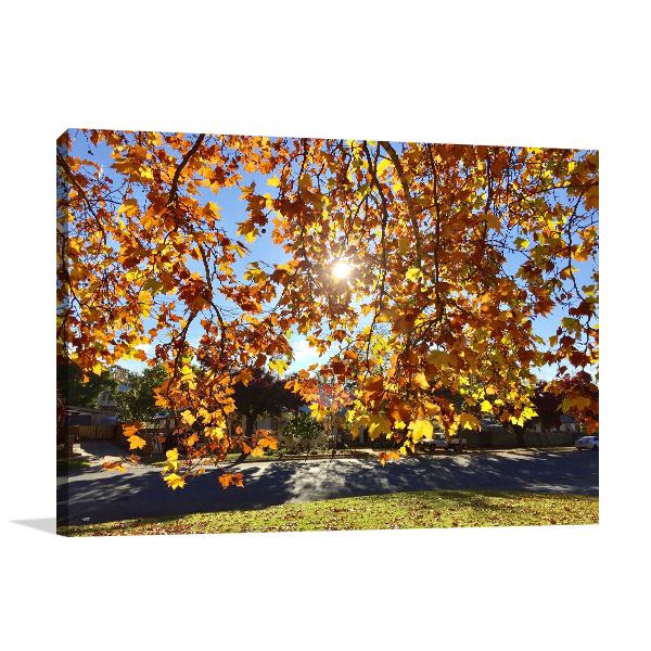 Sunshine Peaking Wagga Wagga Canvas Art Prints