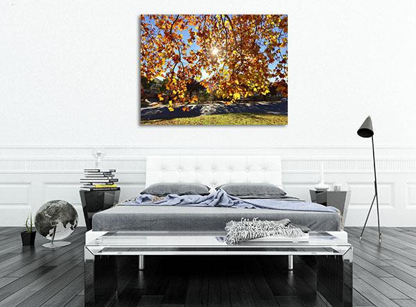 Sunshine Peaking Wagga Wagga Prints Canvas