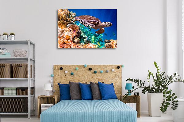 Turtle Under Water Canvas Prints
