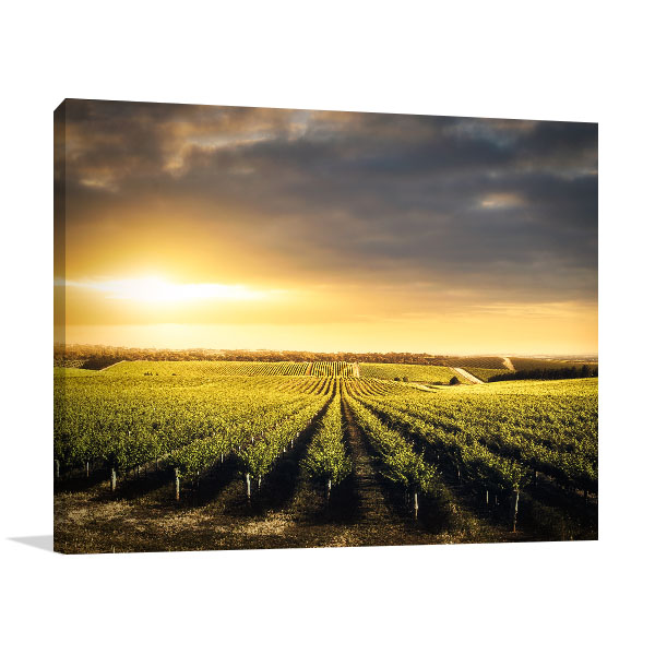 Vineyard Adelaide Canvas Prints
