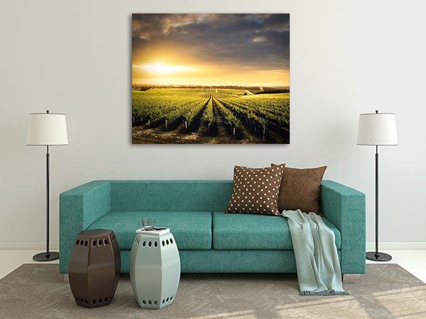 Vineyard Adelaide Prints Canvas