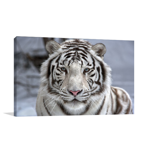 White Bengal Tiger Canvas Art