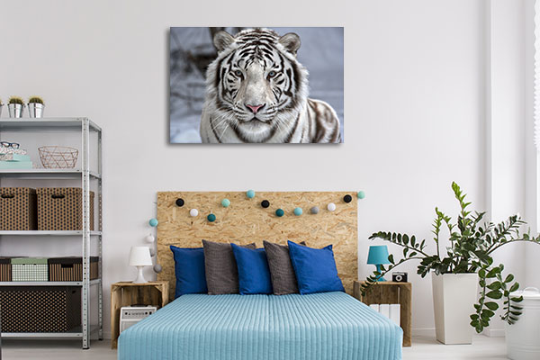 White Bengal Tiger Canvas Prints