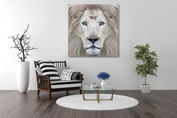 White Lion Wall Art White Lion Artwork
