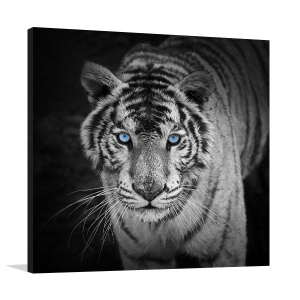 White Tiger Canvas Prints
