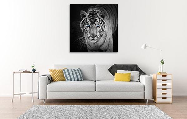 White Tiger Canvas Art