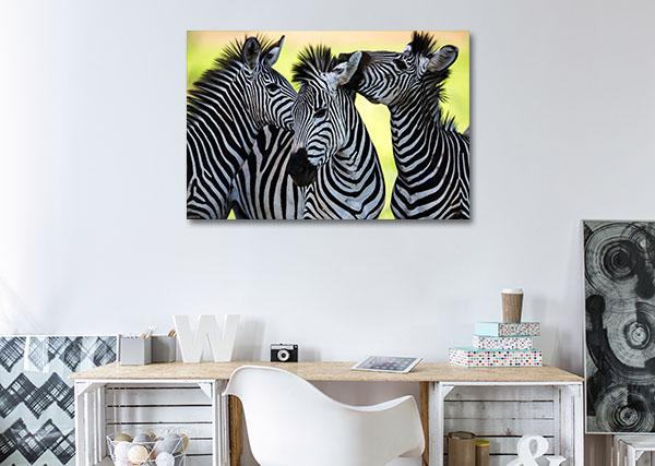 Wild Zebras Wall Art