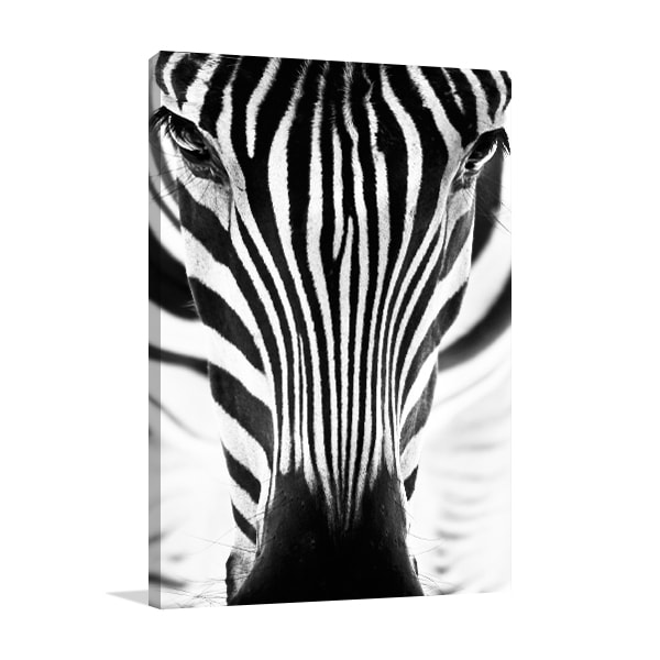 Zebra Prints Canvas
